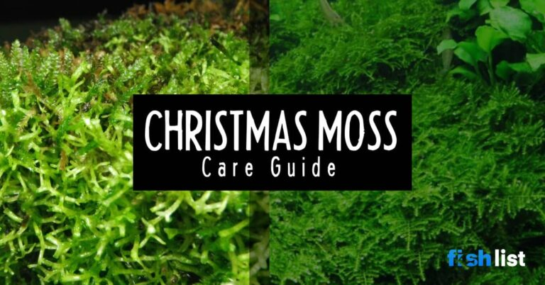 Christmas Moss: Care, Propagation, & Issues