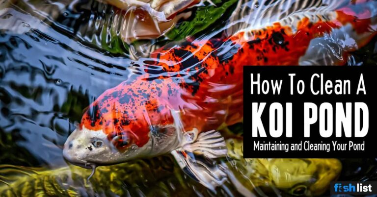 How To Clean Koi Pond – Keeping Your Koi Fish Healthy