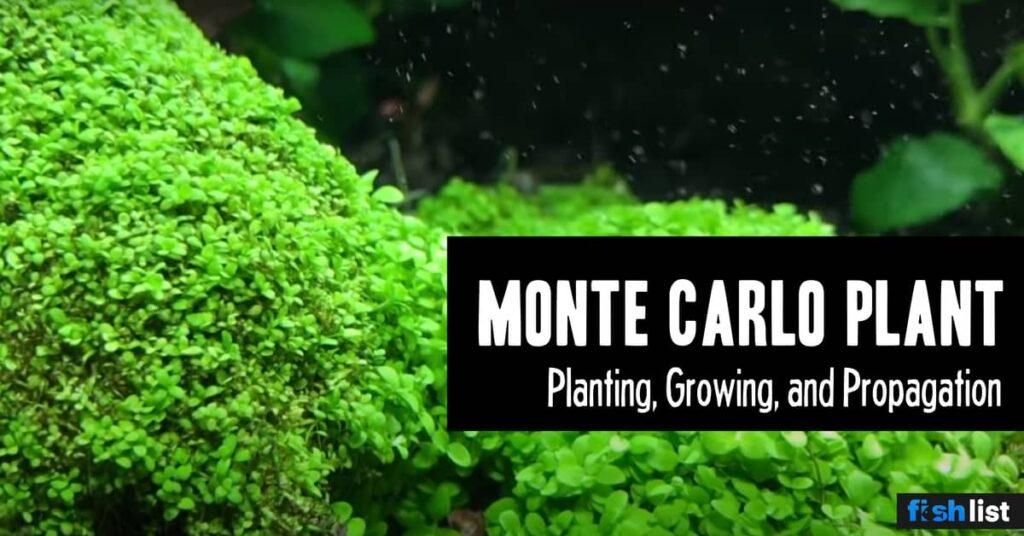 Monte Carlo Plant