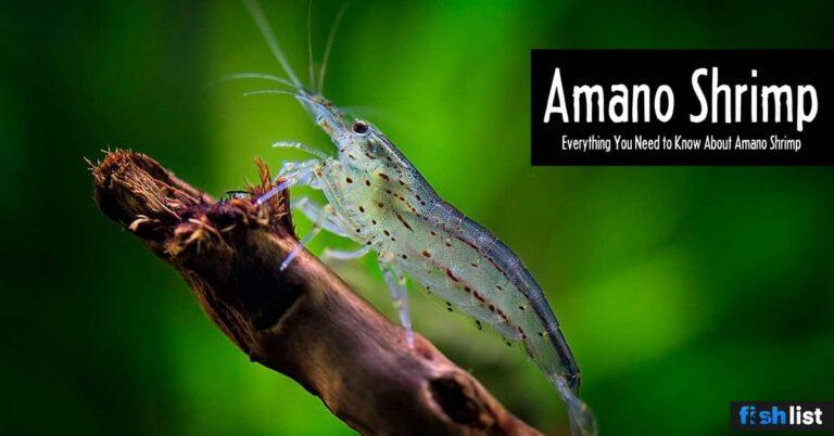 Amano Shrimp: Care, Lifespan, Feeding, Algae Eating, Size, …