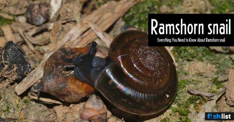 Ramshorn snail: Care, Lifespan, Feeding, Algae Eating, Size, …