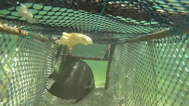 Sea traps